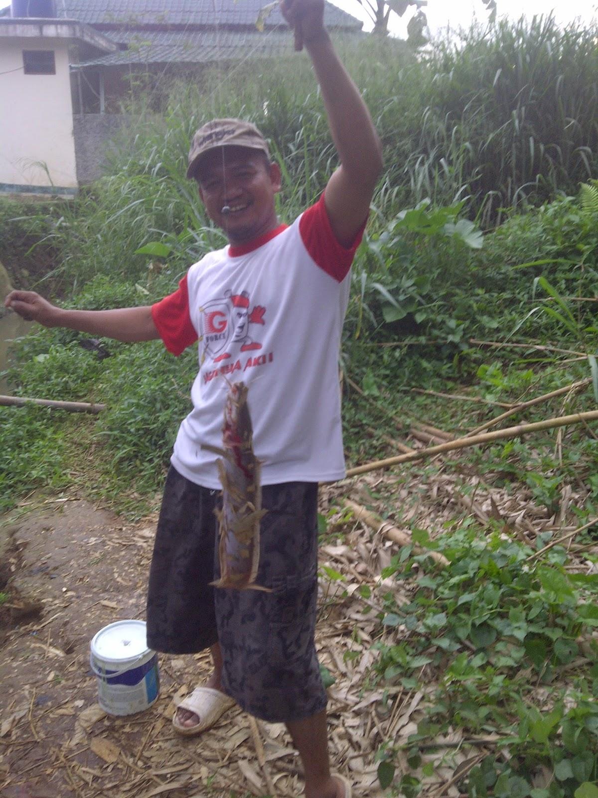 Umpan Hidup Untuk Mancing Lele Galatama Harian Sungai Rawa Siang Dan Malam Site Title